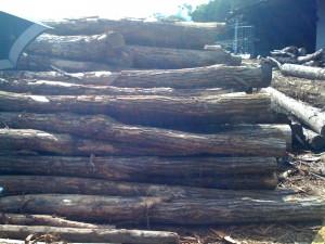栗の原木 土台に使うこともありますがこの太さではちょっと足りないかな